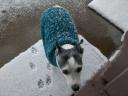 Snowy Dog1
