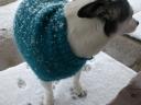 Snowy Dog2